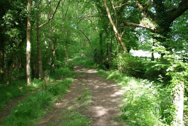 Bridleway along edge of Quakerscorner Copse
