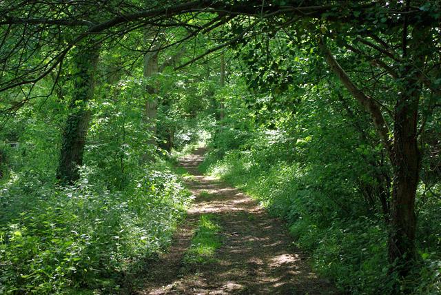 Bridleway by Quakerscorner Copse
