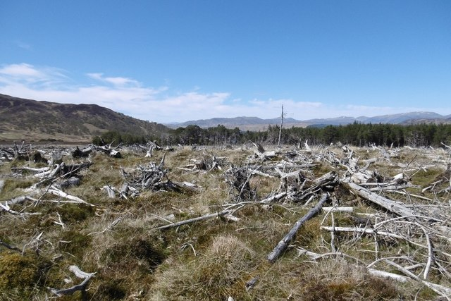Felled area, Rannoch Forest