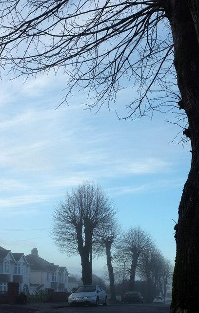 Misty morning, Parkhurst Road, Torquay