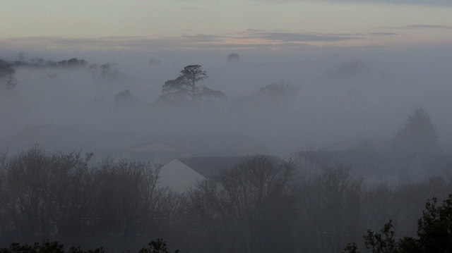 Trees in the mist, Shiphay