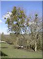 ST6867 : Nature's decorations by Neil Owen