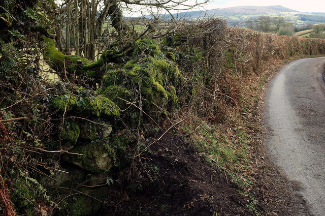 Wall and hedge near Middlecott