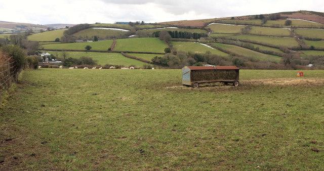 Sheep and feeder near Nattadon Common