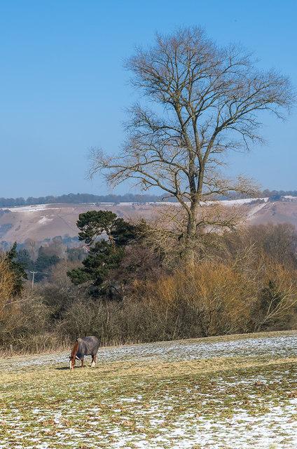 Horse in snowy field