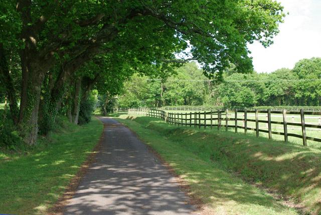 Lane towards end of Dover Lane