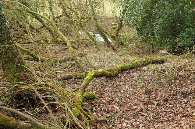 Woodland by Hittisleigh footpath 6