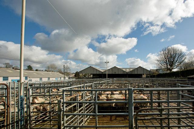 South Molton Livestock Market
