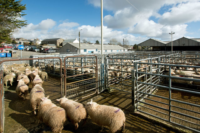 South Molton Livestock Market