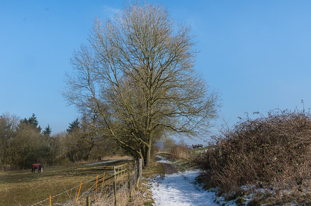 Footpath in snow