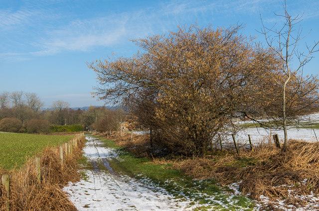 Footpath to Littleton Lane