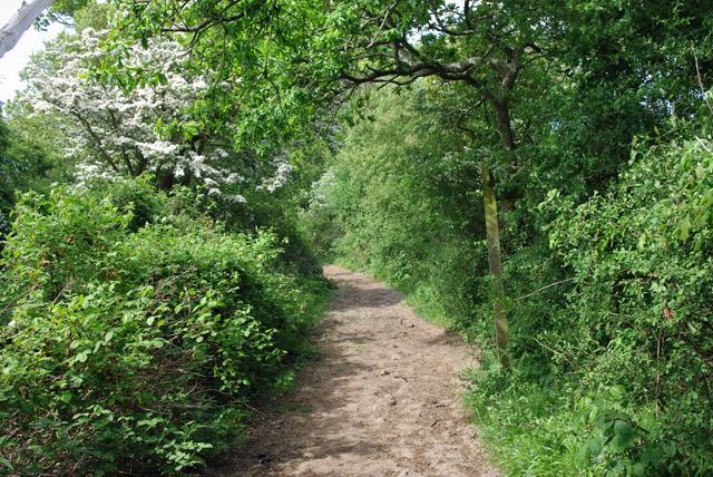 Path Junction, Hammerpot