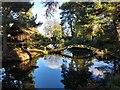 SJ7481 : Japanese Garden by Bryan Pready