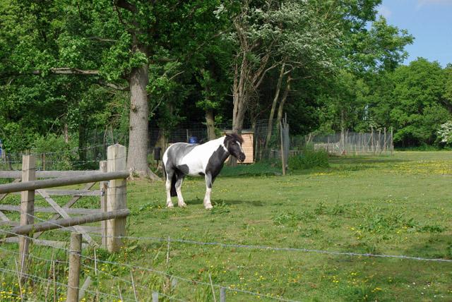 Pony near Swillage Cottages