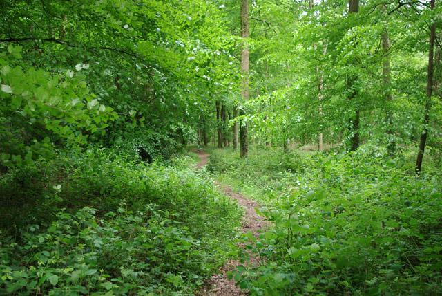 Path, Stonyland Copse