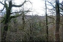 SX4970 : Grenofen Wood by N Chadwick