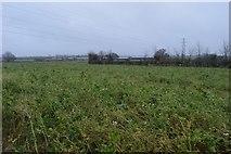 SX9986 : East Devon farmland by N Chadwick