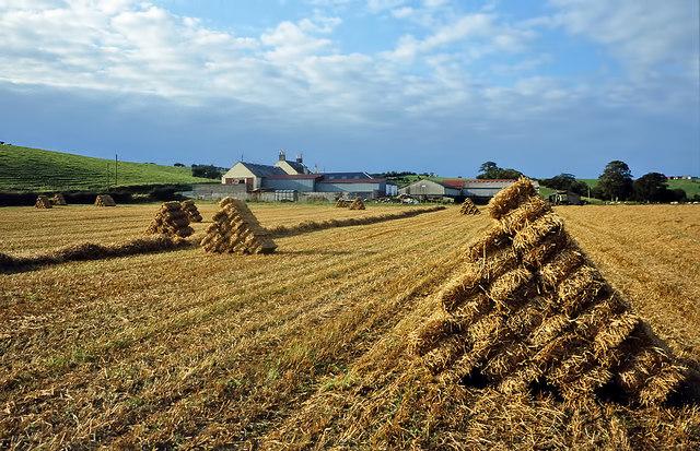 Harvest time at Garpin Farm, Crosshill