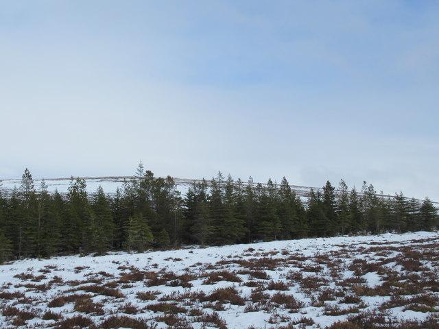 Forest edge west of Cnoc a' Mhaoile Ruaidh by Fiag Bridge, Lairg