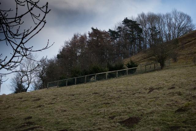 Juniper Exclosure on Birk Head