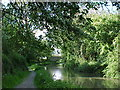 SP4191 : The Ashby Canal approaches Goodacres Bridge, number 13 by Tim Glover