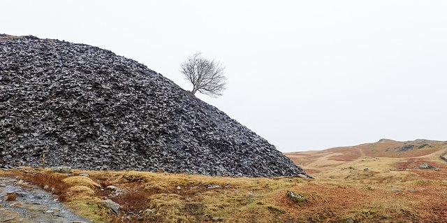 Tree growing from quarry spoil heap