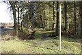 NX3678 : Woodland Path to Stroan Bridge by Billy McCrorie