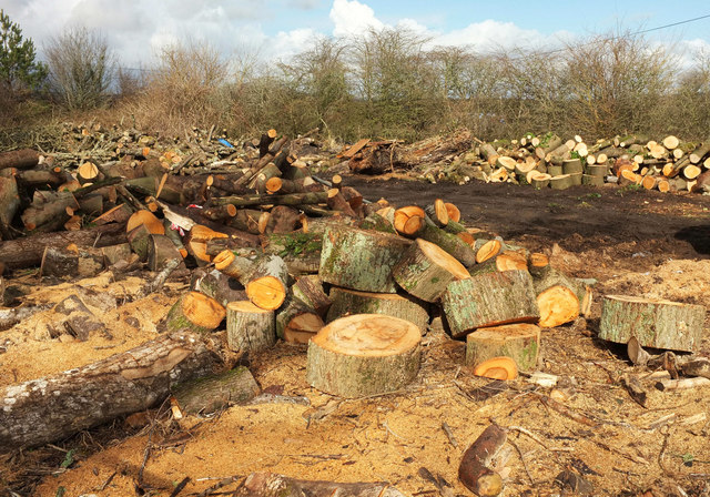Logs near Langford Gate