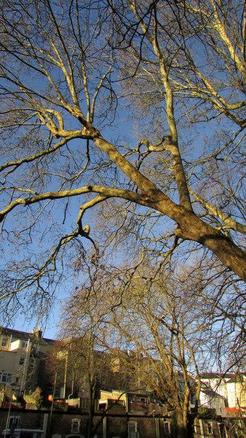 Tree, Upton Park