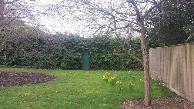 A secret door to a secret garden
