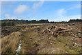 SD6640 : Felled Trees on Longridge Fell by Chris Heaton
