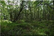 NS7692 : Woodland near Cambusbarron by Richard Webb