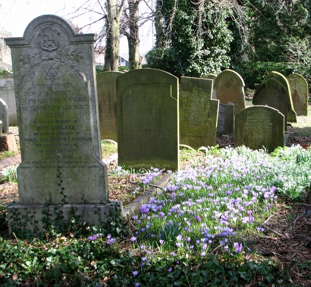 Crocuses in the Jewish Section