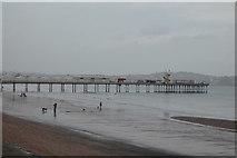 SX8960 : Paignton Pier by N Chadwick