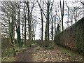 SJ7745 : Path through copse in Madeley by Jonathan Hutchins