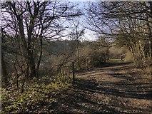 TQ1952 : Bridleway junction near Bachelor's Rough, Headley Heath by Stefan Czapski