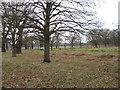 TQ2172 : Richmond Park by Alex McGregor