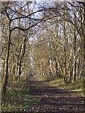 TQ1952 : Track through woodland, Headley Heath by Stefan Czapski