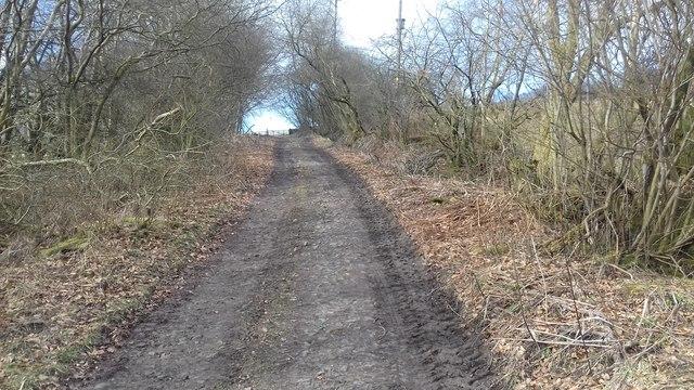 Track near Wattie's Bank