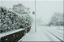 SX9065 : Snow, Cricketfield Road, Torre by Derek Harper
