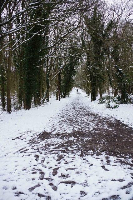 Major path in Burlish Top Nature Reserve, Stourport-on-Severn