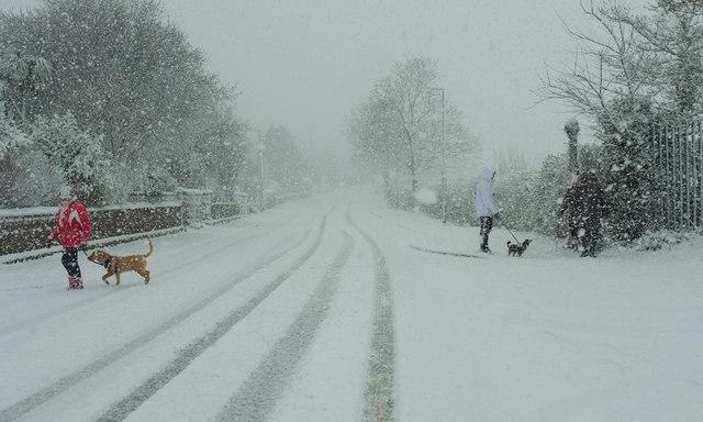 Dog-walking, Cricketfield Road, Torre