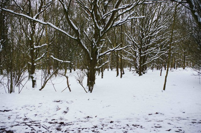 Snow on trees, Burlish Top Nature Reserve, Stourport-on-Severn