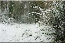 SX9065 : Snowy footpath into Chapel Hill Pleasure Grounds by Derek Harper