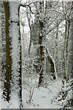 SX9065 : Snow, Chapel Hill Pleasure Grounds by Derek Harper