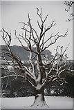 SS9712 : Tiverton : Grassy Field & Tree by Lewis Clarke