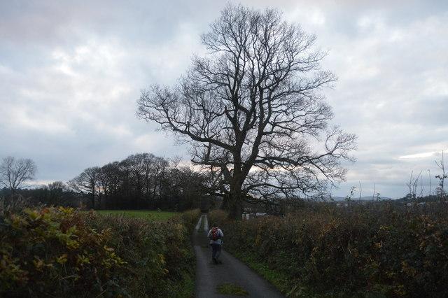 West Devon Way