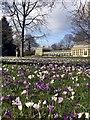 SK3386 : Crocuses in Sheffield Botanical Gardens : Week 12