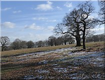 TQ2173 : Traces of snow by Stefan Czapski