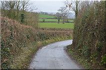 SX9987 : Ebford Lane by N Chadwick